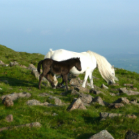 dartmoor-national-park